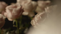 Beautiful white roses in garden Stock Footage