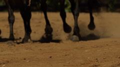 Horses running in field Stock Footage