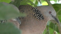Close up, Side Doves in Tree Stock Footage