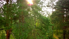 Flying trough forest Stock Footage