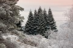 Fir trees covered with snow against the sky in a haze. Stock Photos