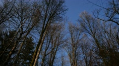 Moving Forest Up Tilt Shot late autumn Stock Footage