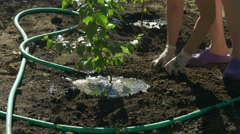 Family planting birch trees in garden. Woman water the tree after planting Stock Footage
