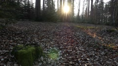 Walking in the Forest late autumn with sun setting Stock Footage