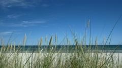 Beach scene with beachgrass. Rügen - Baltic Sea. Stock Footage