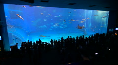 Okinawa Aquarium 4K with Beautiful Whale Sharks. Stock Footage