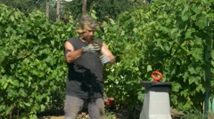 The gardener does mulch using branches shredder. Production of sawdust Stock Footage