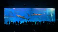 Okinawa Aquarium 4K with Beautiful Whale Sharks. - stock footage