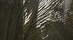 Elephant skin Stock Footage