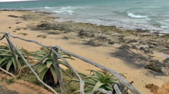 Dry plants on beach Stock Footage