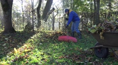 worker man in blue jacket rake fallen leaves and barrow during in backyard. 4K - stock footage