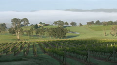 Australia Outlook Hill sun creeping up vineyard pan Stock Footage
