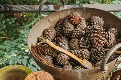 Pine cones in a rusty iron pan Ideas to decorate vintage style Stock Photos