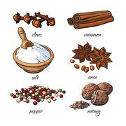 Set of spices - cinnamon, pepper, anise, nutmeg, salt, clove - stock illustration