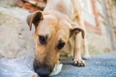 Stray dog eats junk Stock Photos