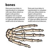 Medically accurate illustration of the hand bones Stock Illustration
