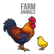 Rooster and chicken poultry farm Piirros