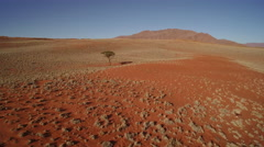 Aerial view of a wilderness tree in desert - Namibia Stock Footage