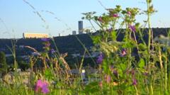 Flowers and city scape - France, Nancy, Haut du lièvre - sunset, focus change Stock Footage