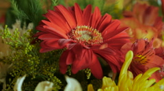 Close up of an assortment of colorful flowers Stock Footage