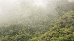 Time-lapse view of mist blowing through primary montane rainforest Stock Footage