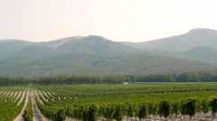 Grape Wineland Countryside Landscape Background of Hills With Mountain Backdrop Stock Footage