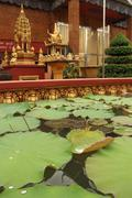 Vertical medium view of water lillies seen floating in foreground in a pool a Stock Photos