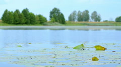 Bright landscape: blue water and green vegetation on the water on a summer Stock Footage