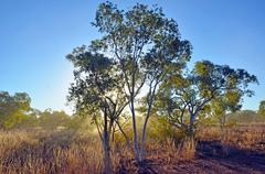 Sunlight and dust in the outback Australian bush Stock Photos