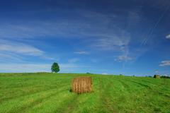 Lonely tree on field with hay bales Stock Photos