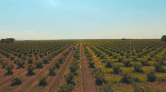 2 tractors work the land on the plantation of hazelnut Stock Footage