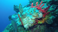Coral Wall - stock footage