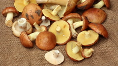 A bunch of mushrooms on the rough cloth vertical panning Stock Footage