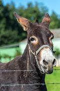 Brown donkey portrait in a summer day Stock Photos
