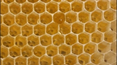 Honey drops movement Stock Footage