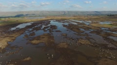 Hula Valley - Birds on the lake at Hula Nature Reserve Stock Footage