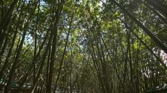 Bright Sun Through Bamboo Tree Crowns Stock Footage