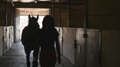 Unrecognizable woman leading horse along of stable. Front view. Stock Footage