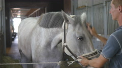 Young boy cleans a horse's head in a stall. Care for animals. Stock Footage
