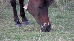 Stallion horses grazing in pasture enjoying the early summer sunshine Stock Footage