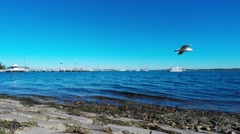 Peaceful Bay with Seagull Fly By  Stock Footage