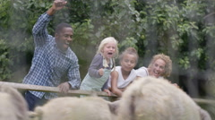 4K Happy mixed race family at community farm watching a pig race & cheering Stock Footage