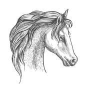 Arabian horse head sketch for equestrian design Stock Illustration