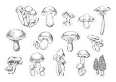 Edible and poisonous wild mushrooms, sketch style Stock Illustration