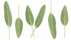 Sage Benefits Anti-inflammatory, Antiseptic and antibacterial, Reduces muscle Stock Photos