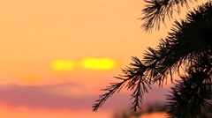 Beautyful summer sunset sky and pine tree branch cut out in light - rack focus Stock Footage