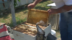 Beekeeper taking frame with swarm of bees from the beehive by Pakito. Stock Footage
