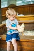 Toddler boy play with the ducklings Stock Photos