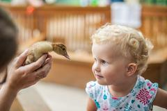 Toddler girl play with the ducklings Stock Photos