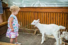 Toddler girl play with the lamb Stock Photos